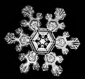 Schneeflockenaufnahme von W. A. Bentley