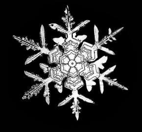Schneeflockenaufnahmen von W. A. Bentley