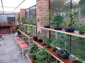 Bonsai-Nursery