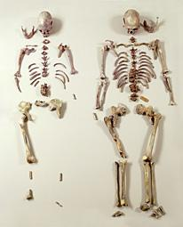Neandertaler-Knochenpuzzle