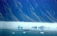 Foto: Herbert Funk/Lesestein.de. Typische Nebelstimmung auf Svalbard