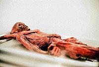 """Die berühmte Mumie """"Ötzi"""" fand in Südtirol ihre letzte Ruhestätte."""