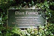 © Dian Fossey Gorilla Fund International..jpeg