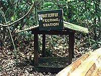 Im Kakum-Nationalpark: Futterstelle für hungrige Schmetterlinge (© W..jpeg