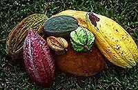 Farbenprächtig: Verschiedene Kakaosorten  (© 2001, Photos To Go).jpeg