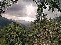 Regenwald bei Puyo  (© C. Mayer).jpeg