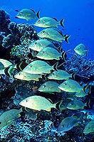 Traumhafte Unterwasserwelt vor Cozumel (© 2000, Photos To Go).jpeg