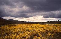 """Im """"Der Herr der Ringe"""" das Land des Bösen, in Wirklichkeit jedoch eine Reise wert: der Tongariro Nationalpark auf der Nordinsel Neuseelands"""