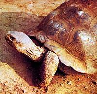 Vorbild Tierreich: Die Schildkröte kennt keine Hektik – und hat ein langes Leben.