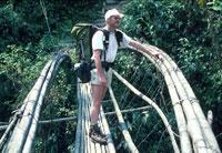 Balanceakt: Abenteuer Regenwald