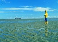 Blick über das Wattenmeer bei Ebbe.jpeg