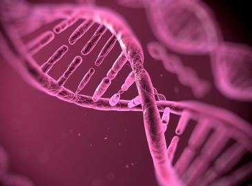 DNA-Darstellung