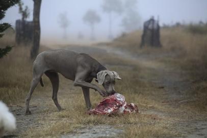 Jagdhund beim Fressen