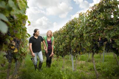 Spaziergang auf einem Weinberg