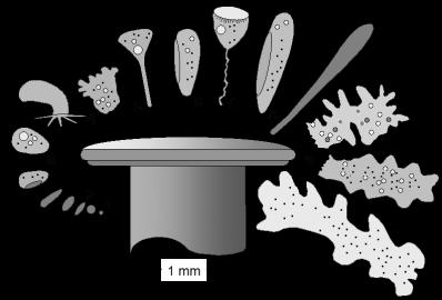 Schematische Darstellung von Lebewesen in einer Wasserprobe