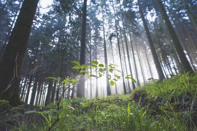Wald bindet CO2 und wirkt daher wie ein Puffer im Klimasystem
