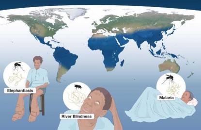 Info-Grafik über Verbreitungsgebiete einiger parasitärer Krankheiten