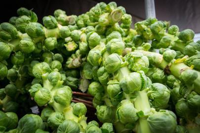 Frisch geernteter Rosenkohl (Brassica oleracea var. gemmifera)