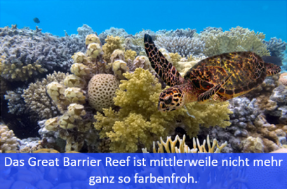 Meeresschildkröte am Great Barrier Reef