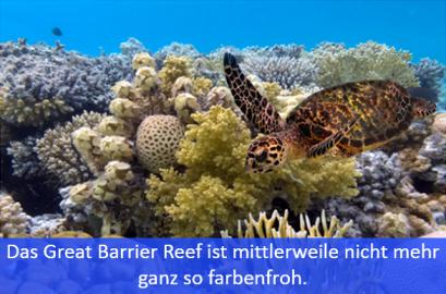 Meeresschildkröte am Great Barrier Reef