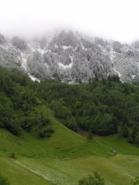 Im Gebirge schützen Wälder vor Lawinen und Erdrutschen
