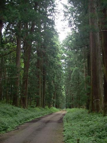 Zedernallee in Nikko