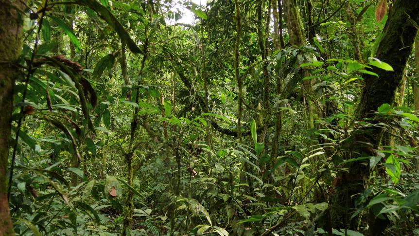 Im tropischen Regenwald von Sumatra