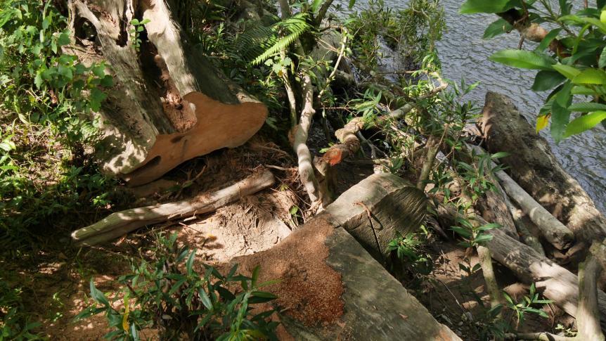 Abholzung des tropischen Regenwalds