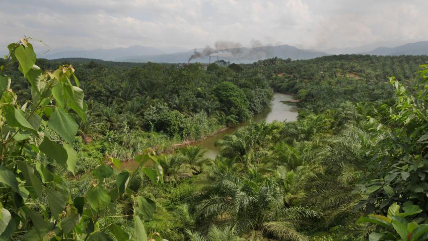 Palmölverarbeitung
