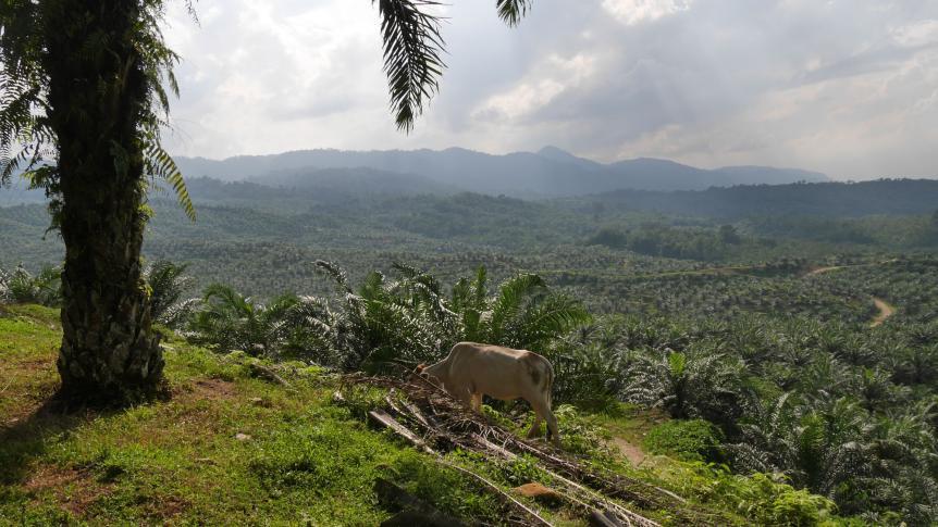 Palmölplantage auf Sumatra