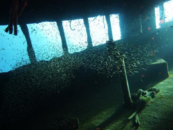 Fsichschwarm auf der Brücke eines gesunkenen Schiffes