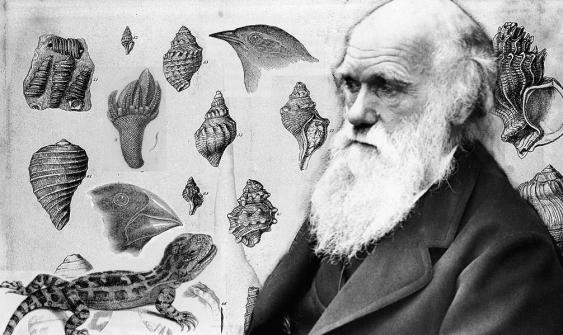 Charles Darwin vor Illustrationen aus seinen Büchern