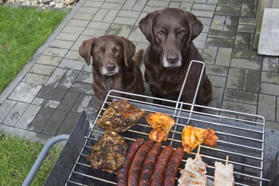 Hunde vor Grill