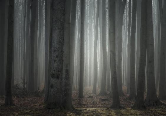 """""""Gespensterwald"""" von Nienhagen"""