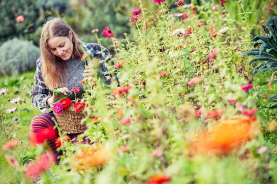 Herbstzeit im Garten