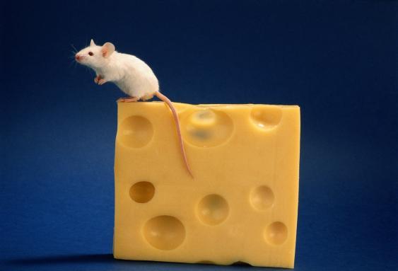 Maus auf Käsestück