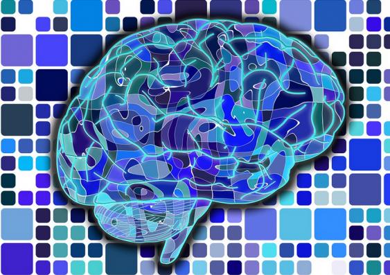 Gehirn vor Raster