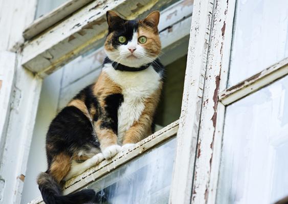 Katze balanciert auf Fensterladen
