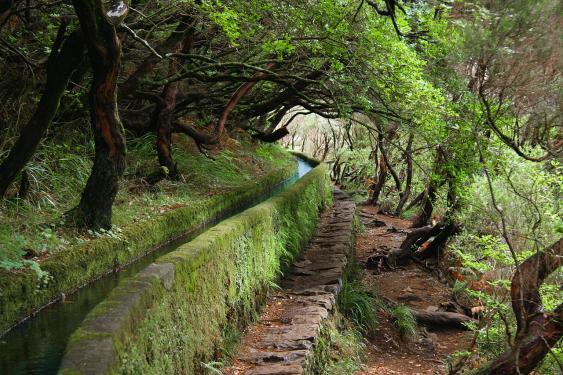 Levadas auf Madeira