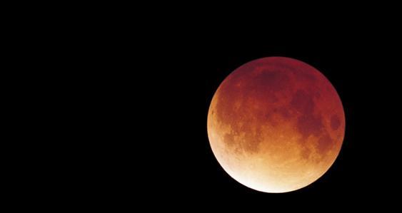 Roter Mona während einer Sonnenfinsternis
