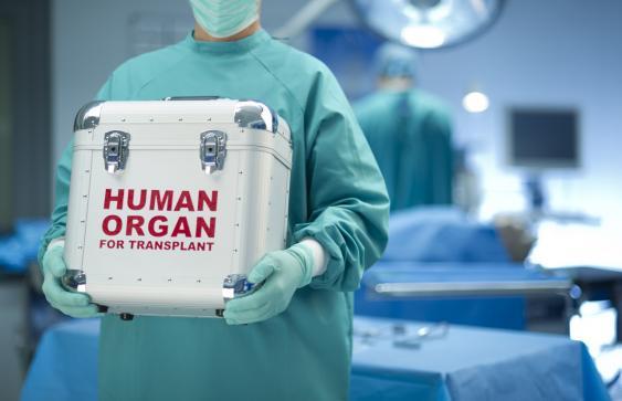 Organtransportbehälter