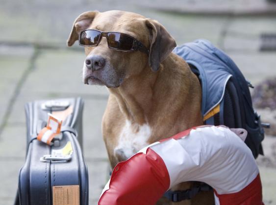 Hund mit Sonnenbrille, Rettungsring und Koffer
