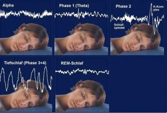 Infografik Schlafphasen