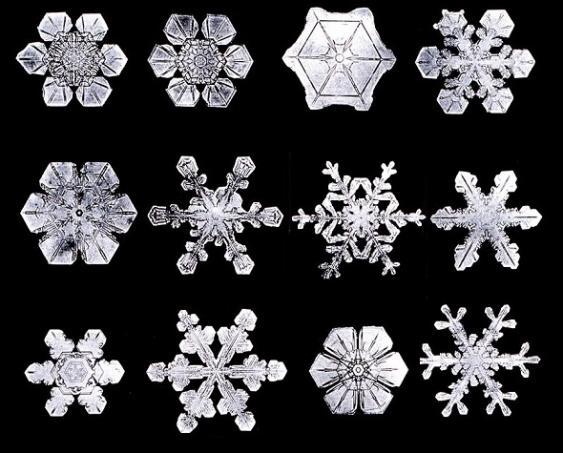 Eiskristallaufnahmen des US-amerikanischen Fotopioniers Wilson Bentley aus dem Jahre 1902.