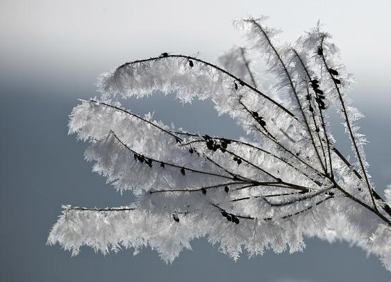 Schnee an den Zweigen eines Strauchs