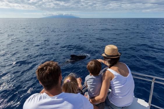 Whale Watching vor Teneriffa