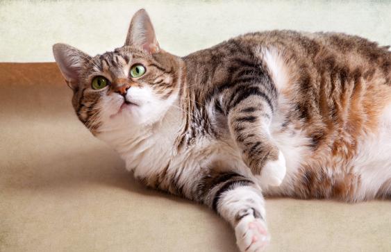 Mollige Katze