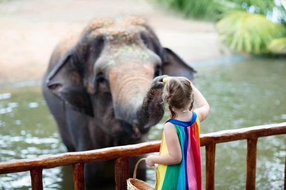 Mädchen beim Füttern eines Elefanten