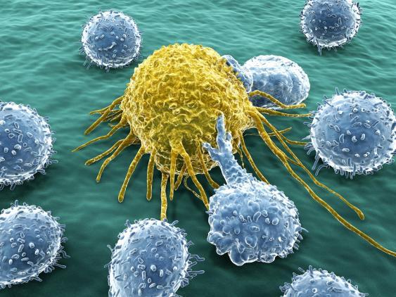 Krebszellen
