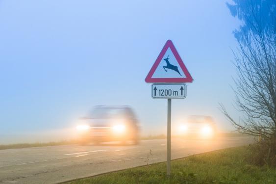 Wildwechsel-Verkehrsschild im Nebel